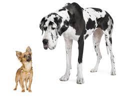 DOG LARGESMALL