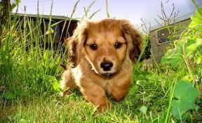 healthy pup