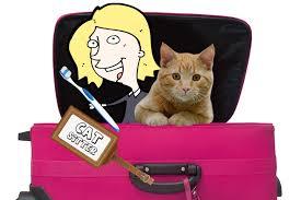CAT SITTER,jpg