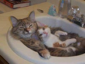 CATS SINK