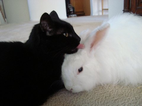 House Bunnies And Cats