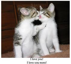 CATS KISSING