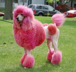 Multi Colored Dog | The Pet Product Guru