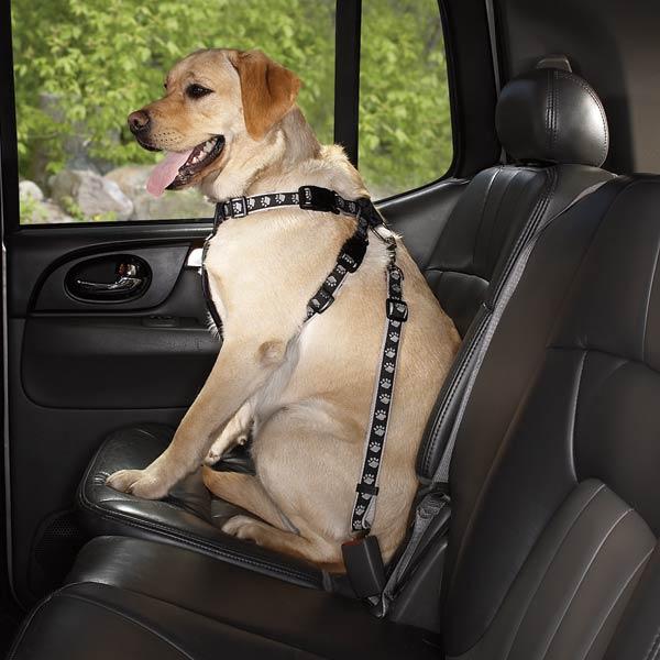 are car dog seat harnesses safe the pet product guru. Black Bedroom Furniture Sets. Home Design Ideas