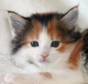CAT CUTIE
