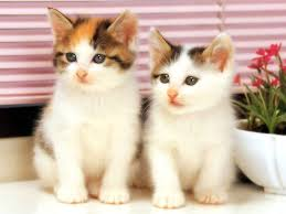 CUTEST CATS
