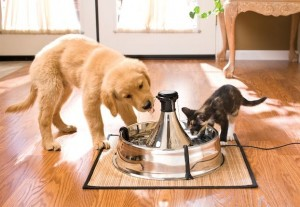 DOG AND CAT DRINKING