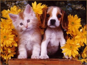 CUTE DOG AND CAT 5