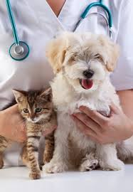 DOG CAT VET