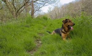 DOG WOODS 5