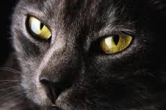 OLDER CAT.jpg3