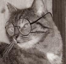 SENIR CAT