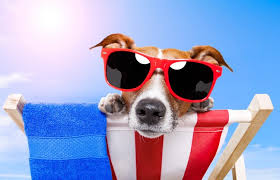 SUMMER DOG 4