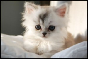 VERY CUTE KITTEN 2