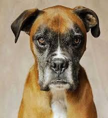 DOG JEALOUS
