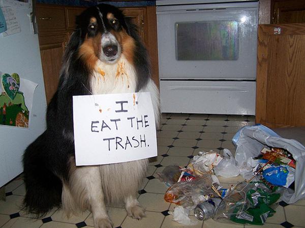 Hasil gambar untuk dog eats trash