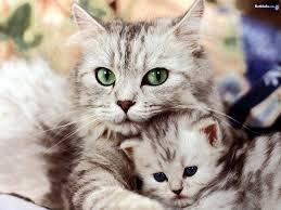 cute cute cats