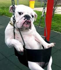 BULLDOG SWING