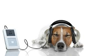 DOG CLASSICAL MUSIC