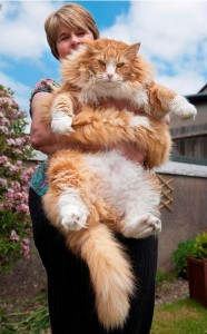 WORLDS LARGEST CAT