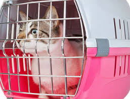 CATCARRIER