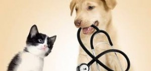DOG AND CAT VET