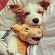 CUTEDOGSTUFFED