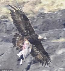 hawk.jog