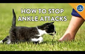 ANKLE ATTACKS