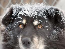 DOG ICY COLD