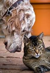 geriatric pets