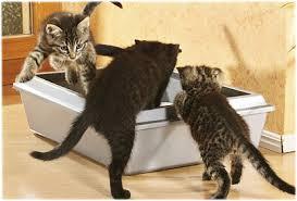 CATS LITTER