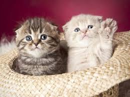 catnames