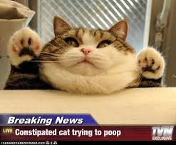 CONSTIPATED CAT