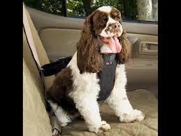 PET CAR