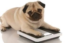 Overweightdog