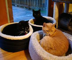 catbeds3