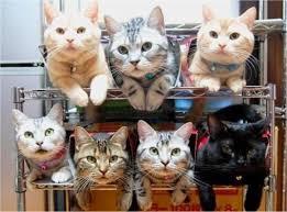 lotscats