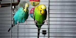 birdscage