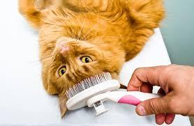 catbrush