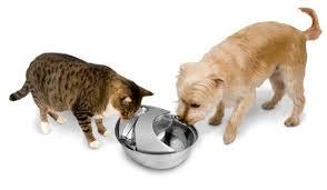 dog cat water
