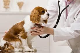 dogbronchitis