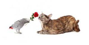 catbirdrose