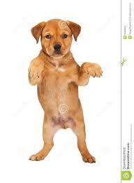 dogstanding