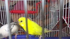 birdincage