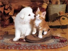 catdogshoe