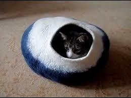 catpod