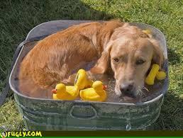dogcool