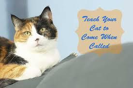 catcoming