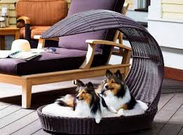 cooldogbed